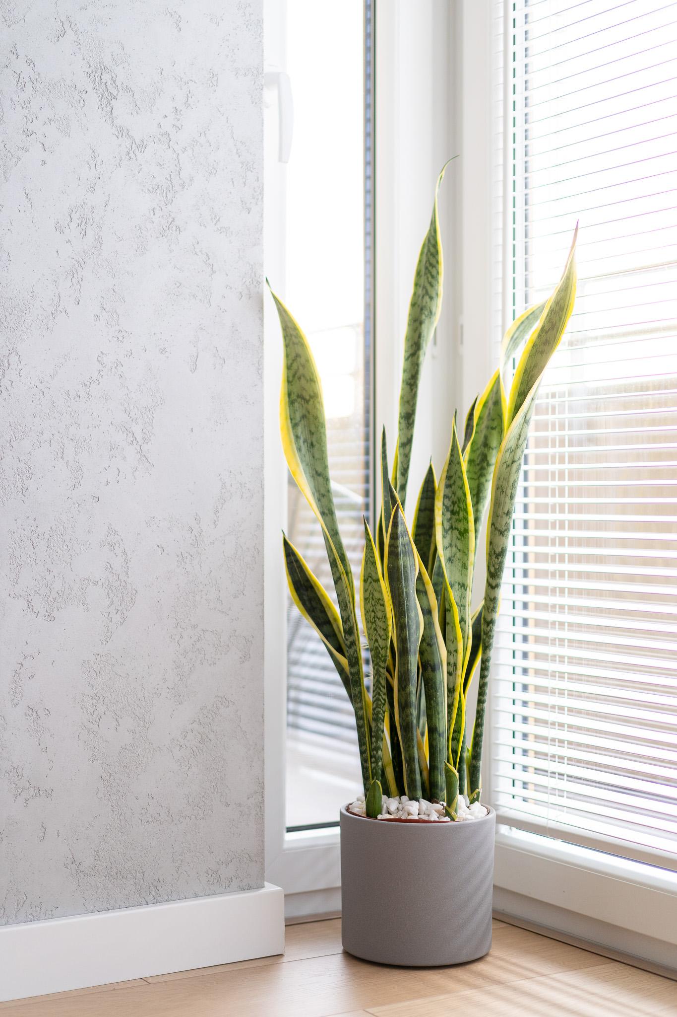 10 projketowanie wnetrz R105 mieszkanie Krakow strefa dzienna zaluzje w oknie beton na scianie kwiaty we wnetrzu